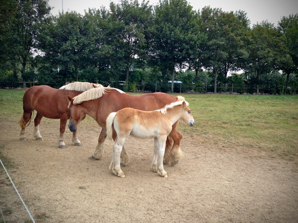 palmhopselect-paardjes