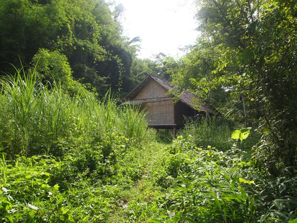 junglehut