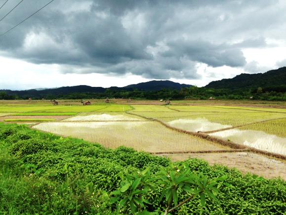 ln-rijstvelden
