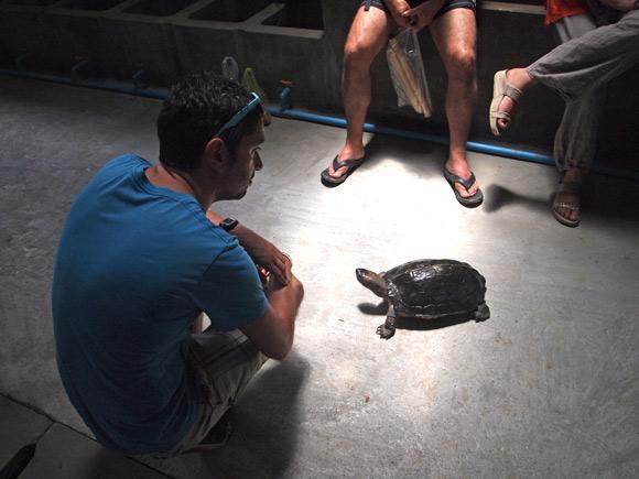 kratie-schildpad-en-fre