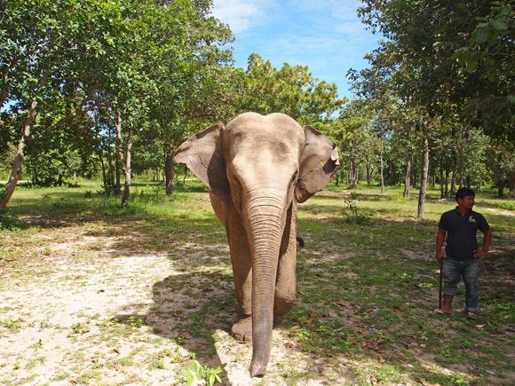 lucky-de-olifant