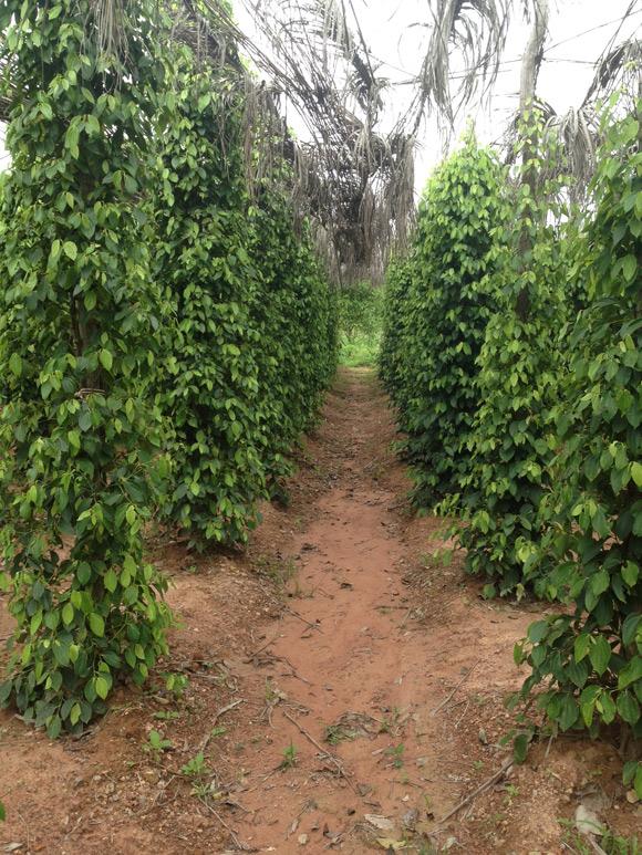 pepper-farm