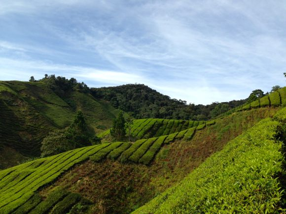 Cameron Highlands - 03