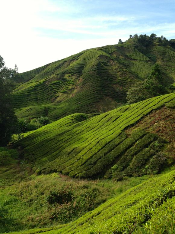 Cameron Highlands - 05