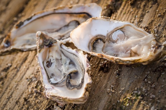 carrefour-oesters-8